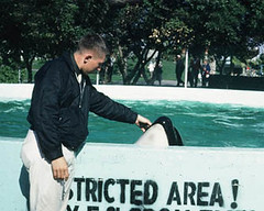 1968-03-14 Pat & Ramu, Sea World  San Diego young orca in 1968 (Pat Hathaway) Tags: sandiego dolphin orca seaworld killerwhale kilroy seaworldsandiego orcinusorca captivekillerwhale pathathawayphoto