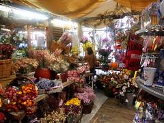 Mercato dei fiori (RobbiSaet) Tags: flowers amsterdam nikon europa europe nederland coolpix fiori olanda s3000 mercatodeifiori paesibassi robbisaet robertasaettone