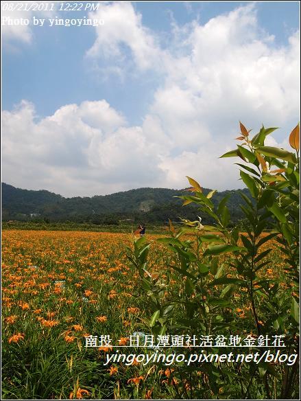 南投魚池_頭社活盆地金針花20110821_R0041579