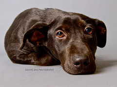 Sweetness (Charlie the Cheeky Monkey) Tags: dogs strays adoptionanimals leecountydomesticservices adoptapetdamnit
