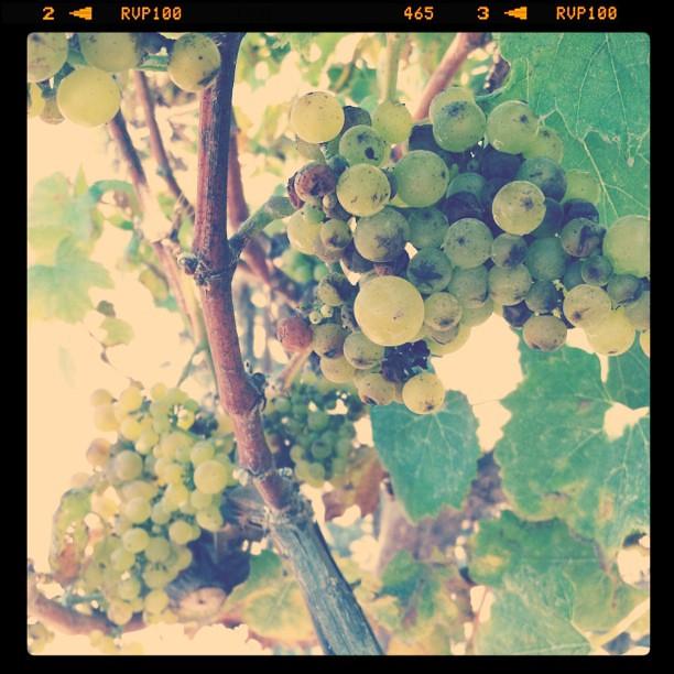 We're grape!