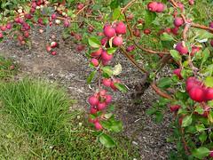 Mark Tree with Fruit