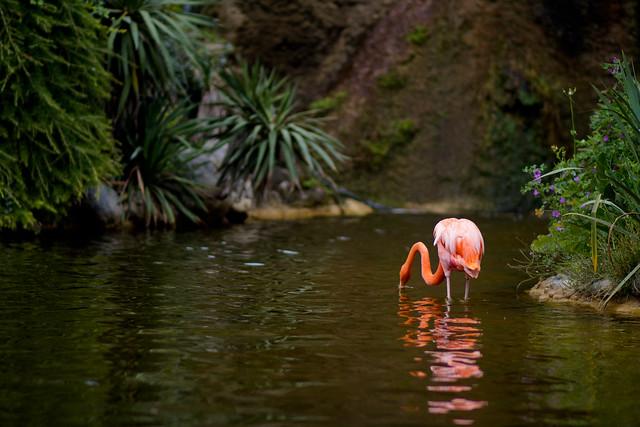 Zoo de la Palmyre (10 sur 10)