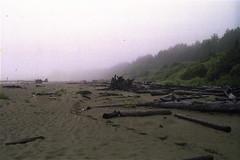 deep peace (Salomeh A) Tags: ocean canada film nature fog analog 35mm britishcolumbia grain tofino westcoast filmphotography naturephotographycanada