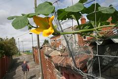 IMG_8024 (Wild Parrots) Tags: street uk marrow doncaster spnp instruction50
