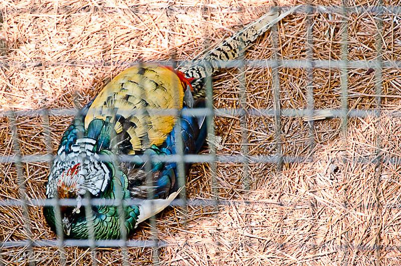 Cape May Zoo28-Edit