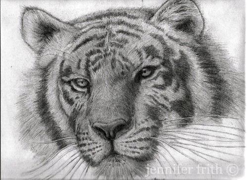Tiger in Pencil by jennyfrith