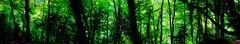 [フリー画像] 自然・風景, 森林, 樹木, パノラマ, 201108130500