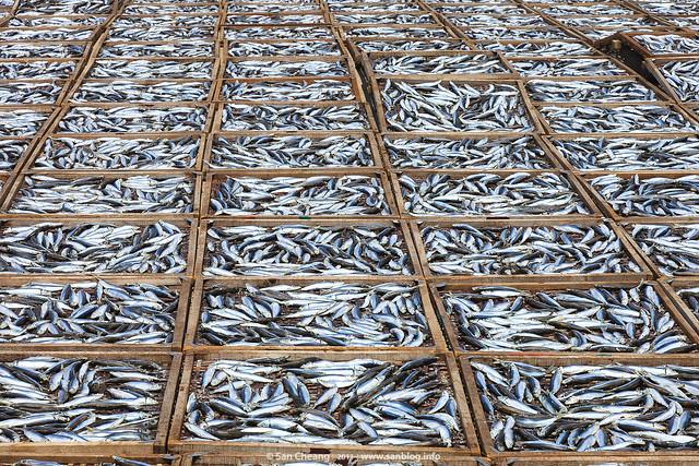 澎湖井垵曬魚場