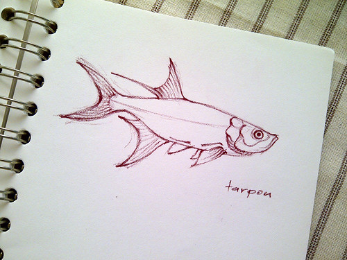 Fish Sketch, Tarpon