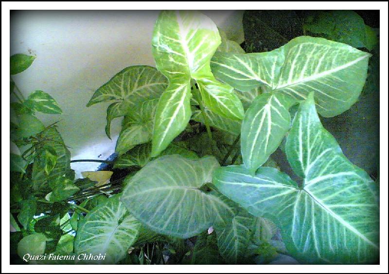 http://farm7.static.flickr.com/6065/6048425617_ed52bd10ab_b.jpg