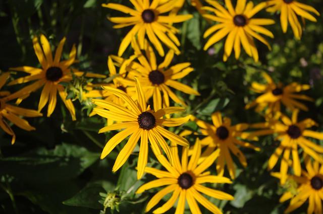 Flowers on Garden Drive