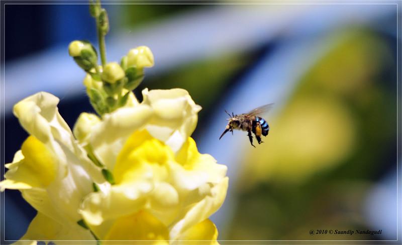 bluefly-nandihills