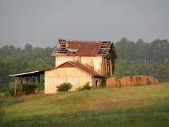 Barn in Early Morning Light (David Hoffman '41) Tags: wood morning roof sun tree field birds rural fence landscape tin virginia early farm country neglected barns shed storage redhouse frame slats roll hay agriculture bale tobacco disrepair leanto gableroof charlottecounty