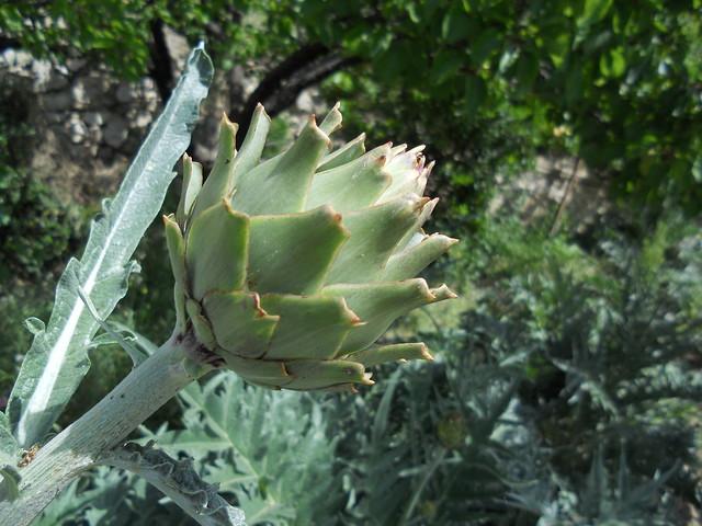 Guhyaloka flora 2