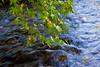 Leaves over the river (Theophilos) Tags: nature leaves river greece drama kefalari ελλάδα φύλλα φύση ποτάμι δράμα κεφαλάρι