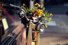 The bike with the yellow flowers (nina's clicks) Tags: flowers bike bicycle sunny yellowflowers