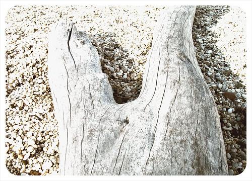 driftwood legs
