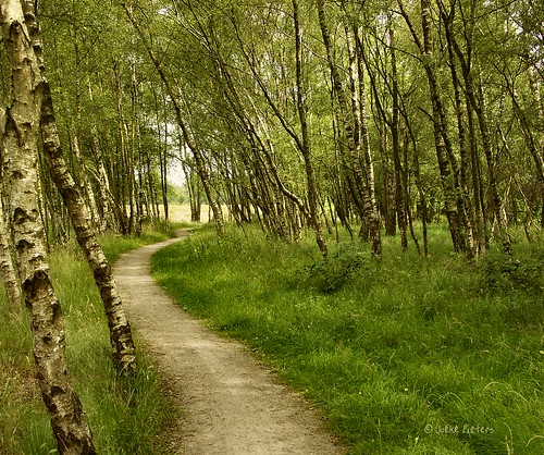 The winding path through the birches by joeke pieters