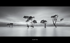 Silver Tide (itsgottabered) Tags: longexposure bw monochrome canon ngc australia wideangle queensland mangroves 1740mm hightide stormyskies beachmere treesinwater hitechfilters 5dmkii