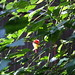 北沢緑道の花