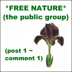*FREE NATURE*