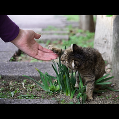 (Masahiro Makino) Tags: woman japan female digital cat photoshop japanese kitten kyoto hand olympus adobe  stray  zuiko lightroom 11 e500 1454mm  f2835  20110831 20071115145601e500ls640p