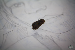 Roachie (GanjaGrouch) Tags: portrait illustration weed drawing smoke sketchbook 420 smoking pot marijuana roach cannabis reefer stoner dank ganja medicalmarijuana kush