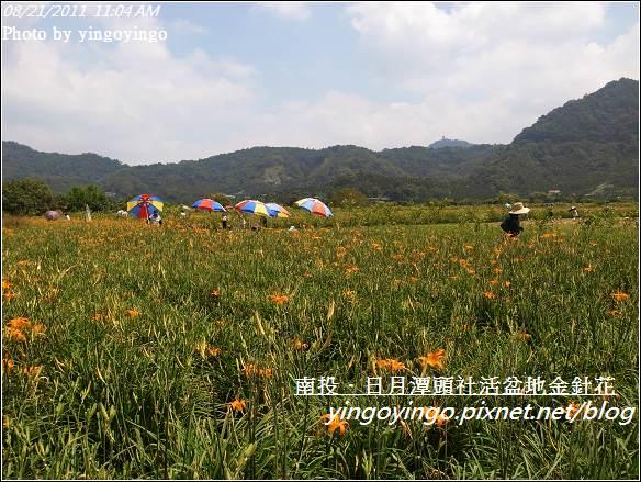 南投魚池_頭社活盆地金針花20110821_R0041537