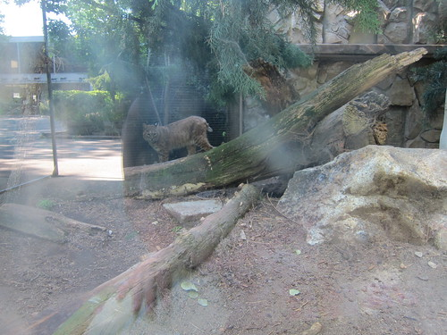Zoo Boise 8/5/11