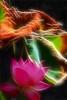 Lotus flower and brown leaf - Fractalius - IMG_5567-800-fra (Bahman Farzad) Tags: brown flower macro yoga leaf peace lotus relaxing peaceful meditation therapy lotusflower lotuspetal lotuspetals fractalius lotusflowerpetals lotusflowerpetal