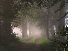 Walk into a fairytale (Wilma1962*) Tags: trees mist fog dawn nevel bomen ngc dirtroad ochtend dageraad zandweg mygearandme mygearandmepremium mygearandmebronze mygearandmesilver mygearandmegold mygearandmeplatinum mygearandmediamond