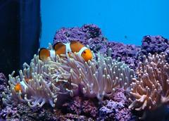 Two Nemos