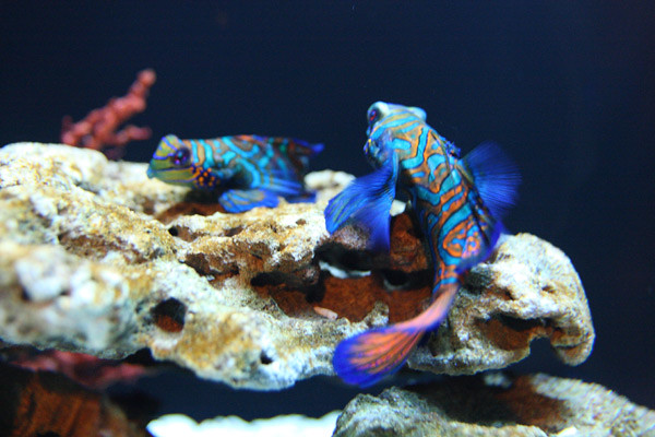 Colourful.Fishes