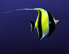 (Cliff Michaels) Tags: blue atlanta fish black yellow photoshop aquarium nikon niceshot d5000 pse9