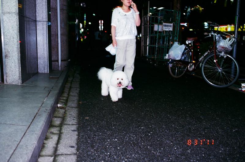 2Ddog (1 of 2)
