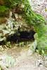 Nacimiento bajo el haya (Jose Casielles) Tags: bosque león nacimiento haya yecla hayedo ciñera faedo fotografíasjcasielles