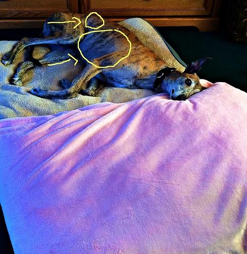ventura's new bed 1