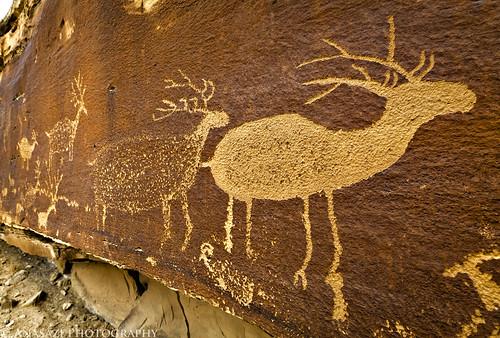 Nefertiti Elk