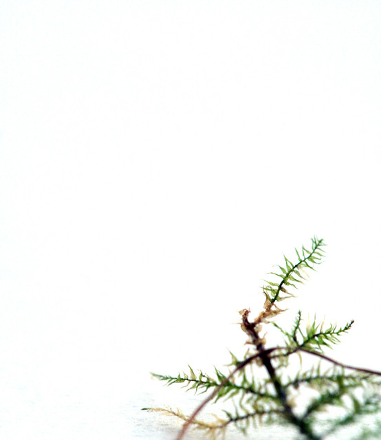 tiny tiny moss?