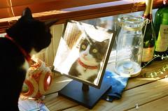 [フリー画像] 動物, 哺乳類, 猫・ネコ, 鏡・ミラー, 201108131100