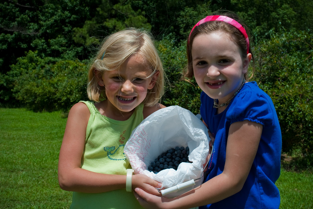 39Blueberries2011