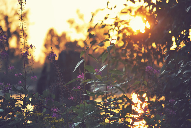 Violet Sun