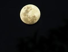 MOON (jgspics) Tags: moon australia moonrise nsw oberon