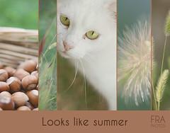 Looks like summer. (phranci) Tags: summer flower cat estate bokeh nuts fiore project365 nocciole