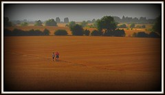 Taking the long View (Dazzygidds) Tags: trees dog haze couple fields hazy nottinghamshire distantviews nottinghamshirewolds