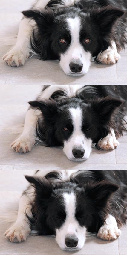 Zzzzzz
