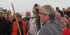 Fiskeauktion 2011 023