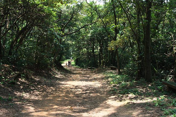 蘆竹羊稠森林步道 0008