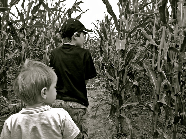 Children of the Corn. By Ian Layzell